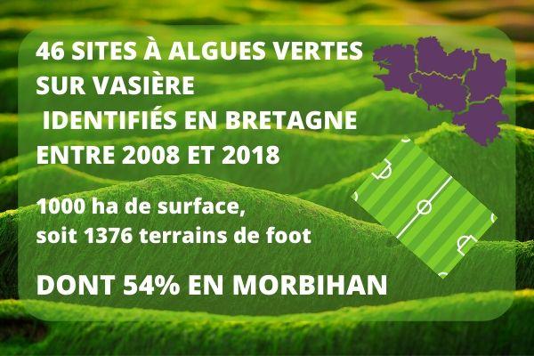 Algues vertes vasières infographie