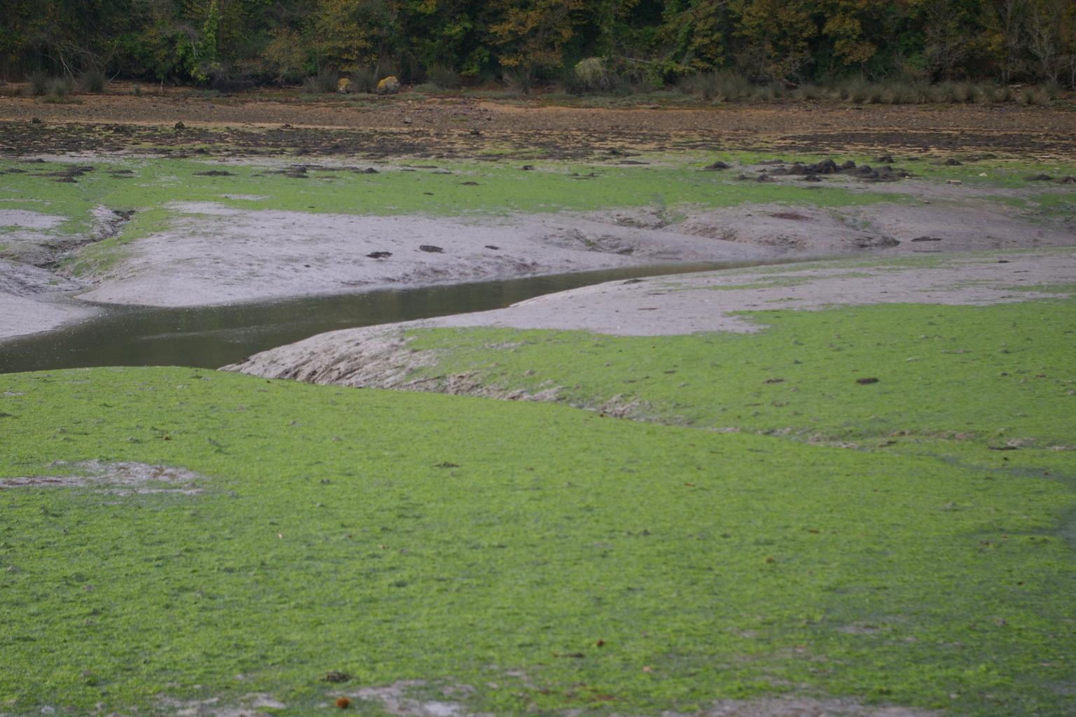 Prendre en compte les marées vertes sur vasières [14/12/16]