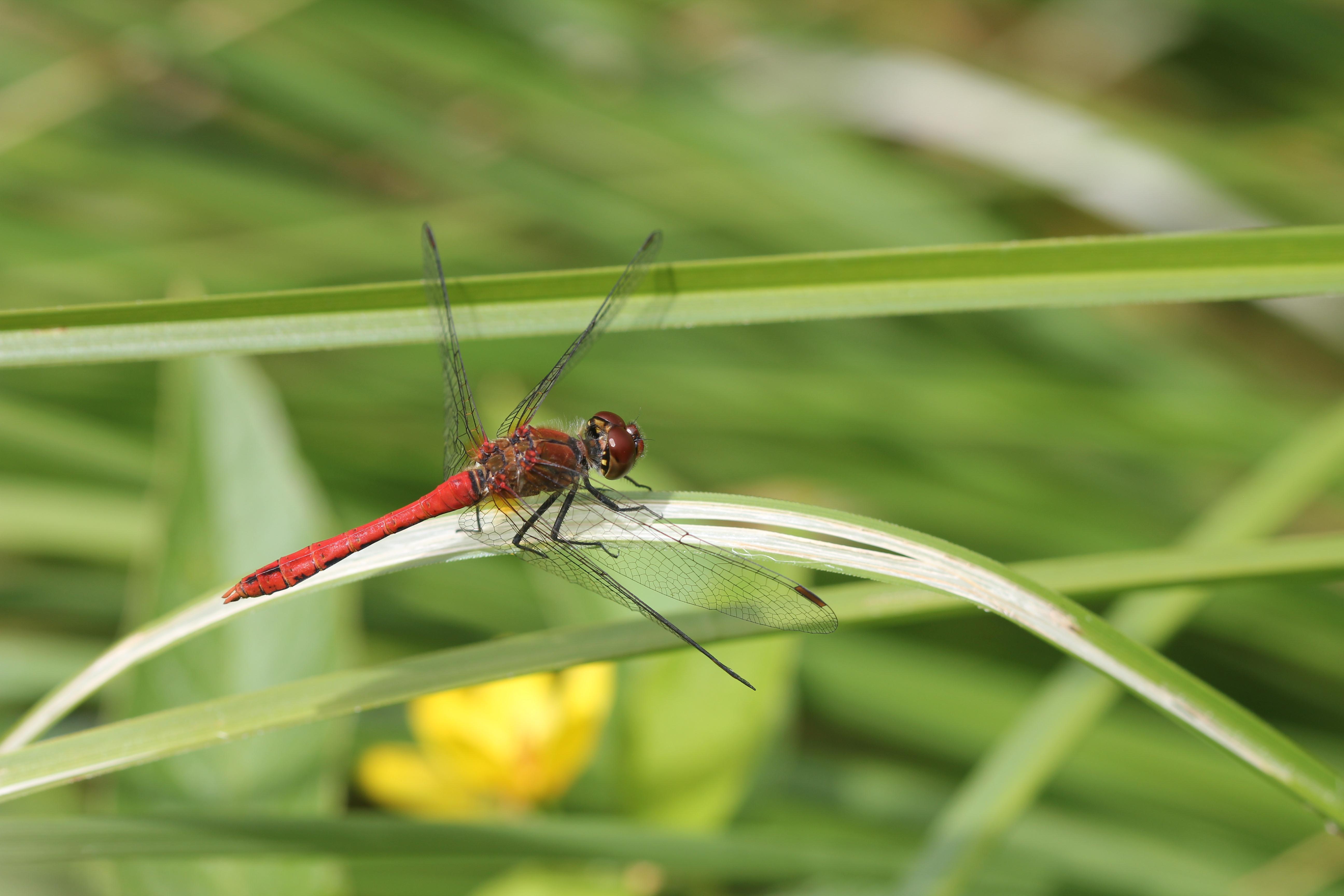 Le temps des libellules
