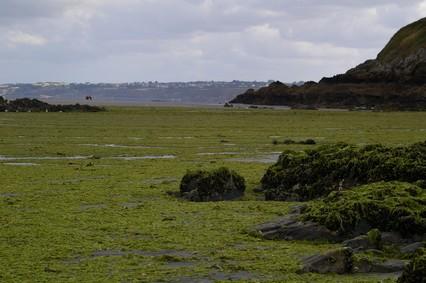 Algues vertes | Les élus doivent se mobiliser