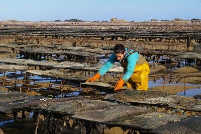 Interdiction de pêche des huîtres et coquillages: un fléau à combattre [01/04/16]