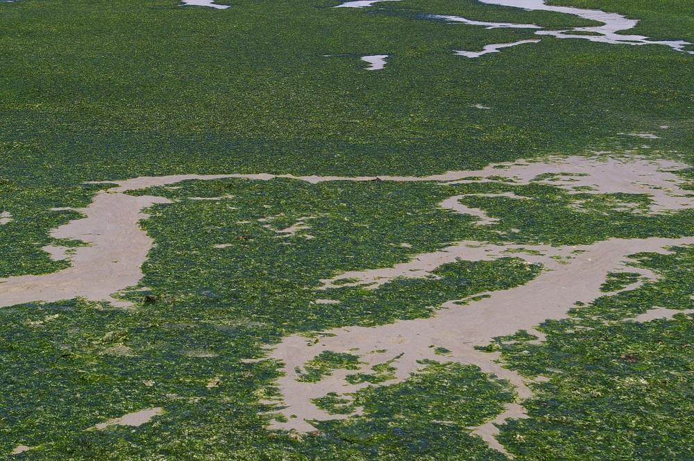 Accident mortel lié aux algues vertes ? Où en est-on ? [12/10/16]
