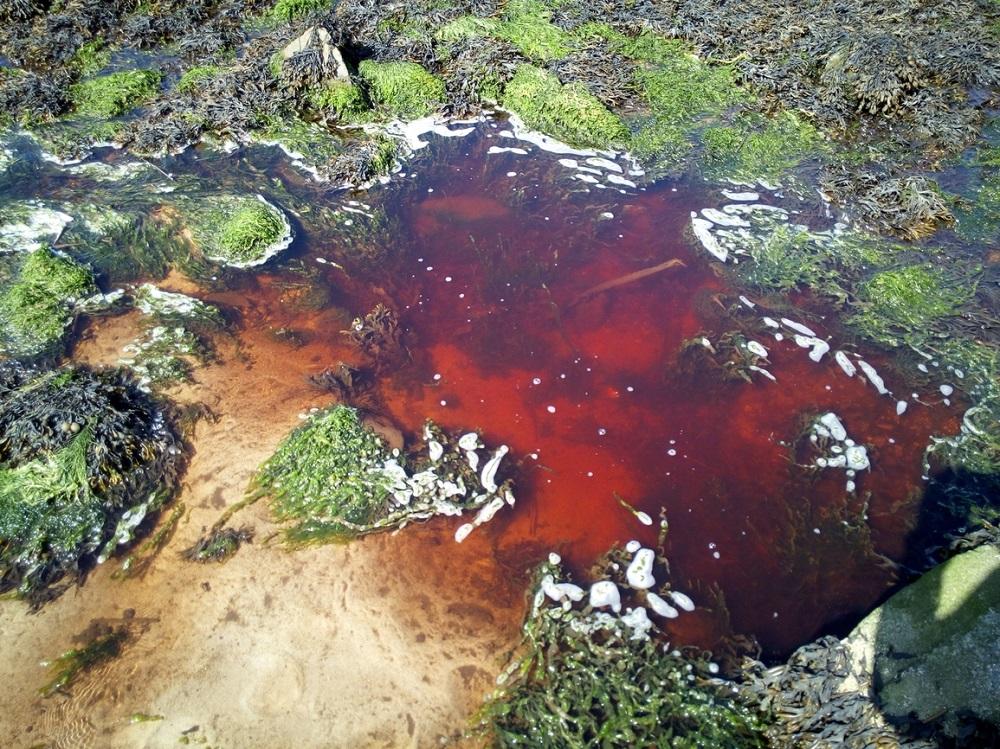 Ruisseaux côtiers pollués par les nitrates et les pesticides, les serristes suspectés [29/06/2017]