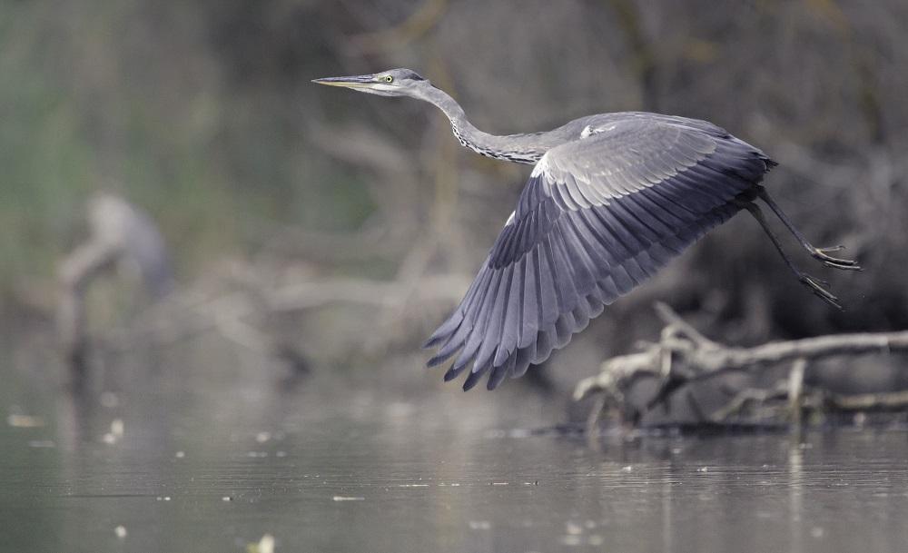 Prends la plume : un concours pour écrire sur les oiseaux d'eau [18/07/2018]