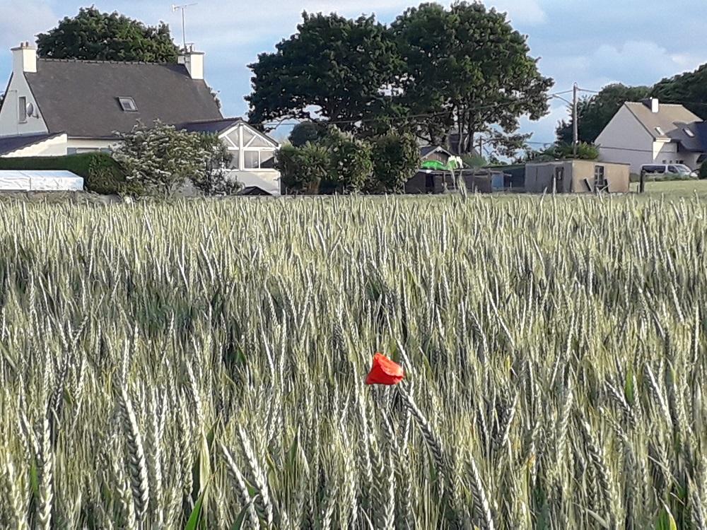 Pesticides | Nos recours contre les dérogations des préfets