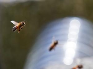Stage d'apiculture en ruche Warré