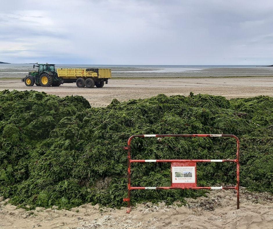 Vidéo | Mais que fait l'État contre les algues vertes ?