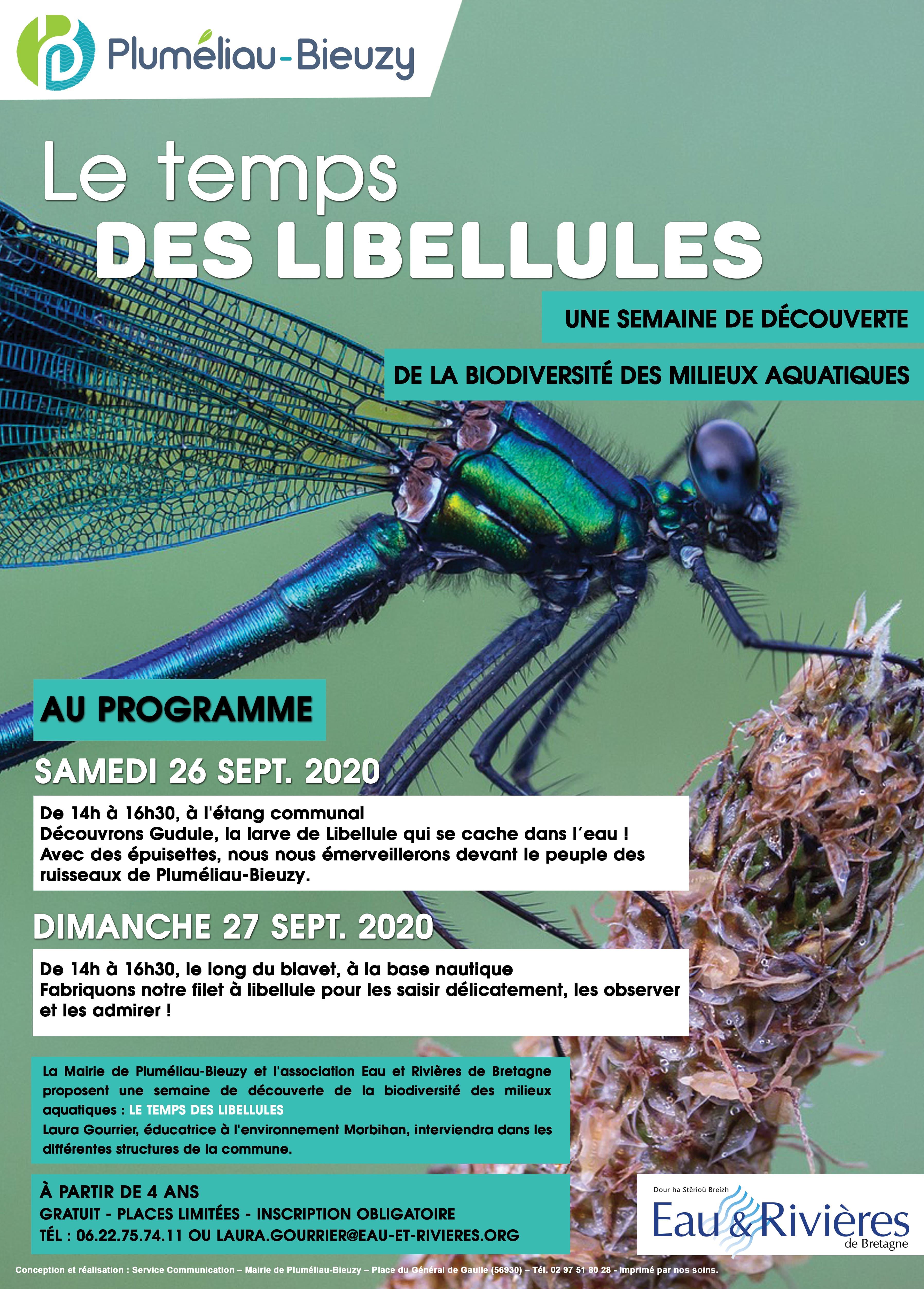 Le temps des libellules à Pluméliau-Bieuzy