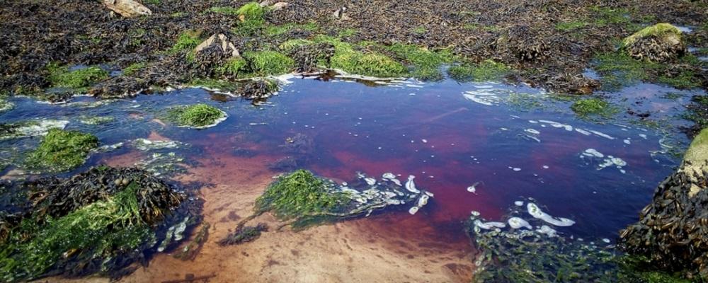 Les serres ont bien pollué la rivière