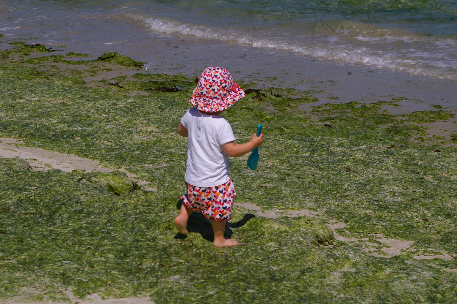 Algues vertes | Il y a urgence à activer le levier réglementaire