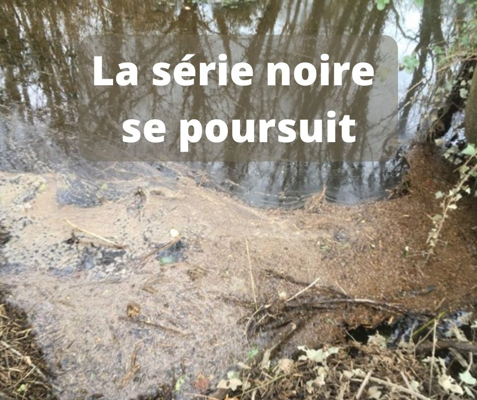 Pollution au lisier sur le Bélon : poissons morts et biodiversité détruite