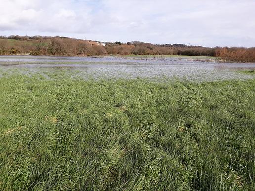 Locminé, zones humides détruites sans compensation