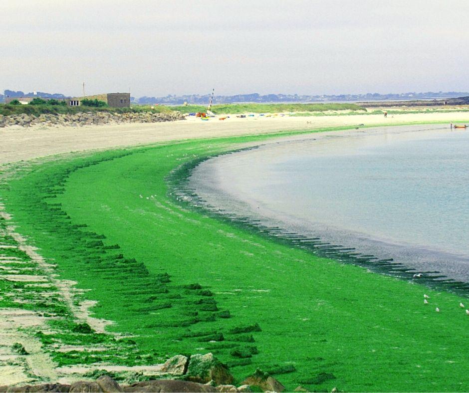 Marées vertes et nitrates : le devoir de vérité