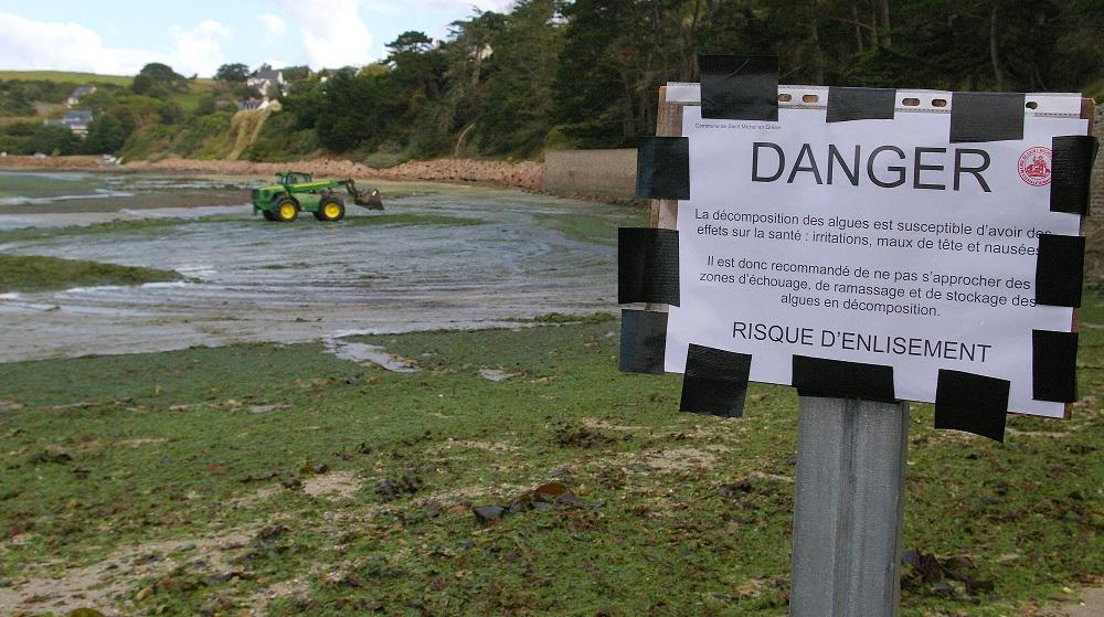 Déjà deux plans de lutte contre les algues vertes