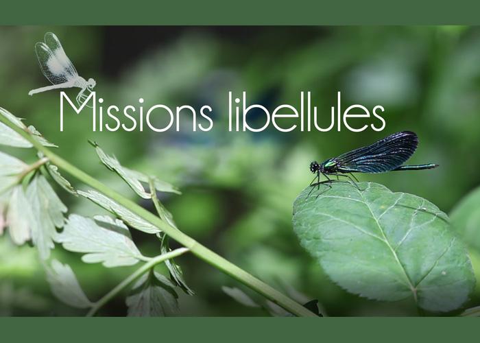 MOOC | Une nouvelle mission libellule !