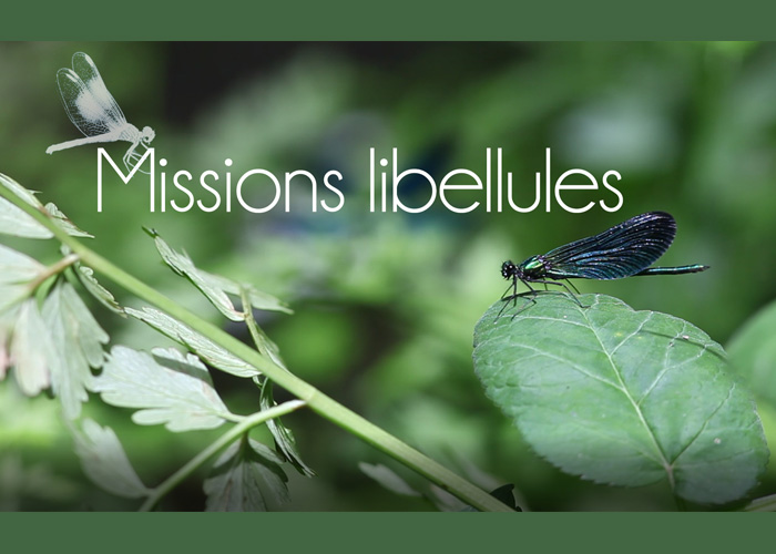 MOOC | Missions libellules