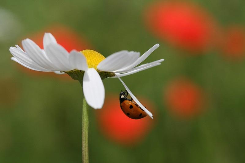 """Le temps des auxiliaires """"Les alliés du jardinier"""" [16/10/2017]"""