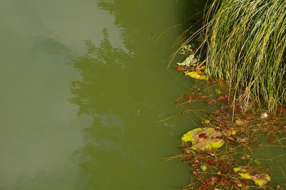 Les plans d'eau asphyxiés