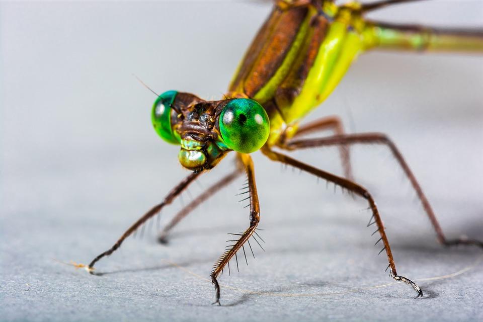 Les livrets libellules