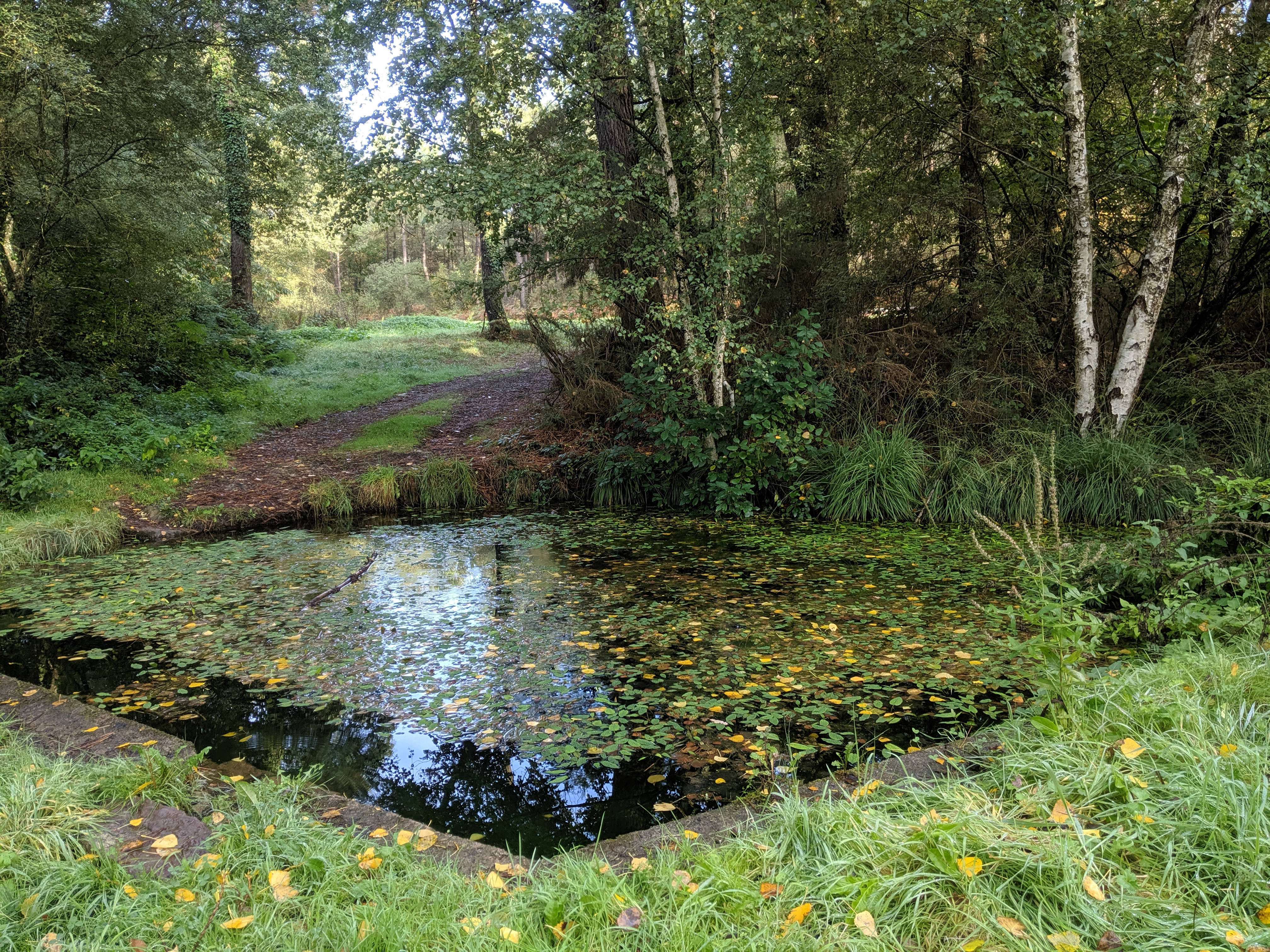 Mise en valeur de la fontaine de l'Hermitage à Goven