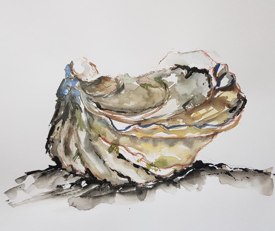 A quand la transparence sur les huîtres triploïdes ?