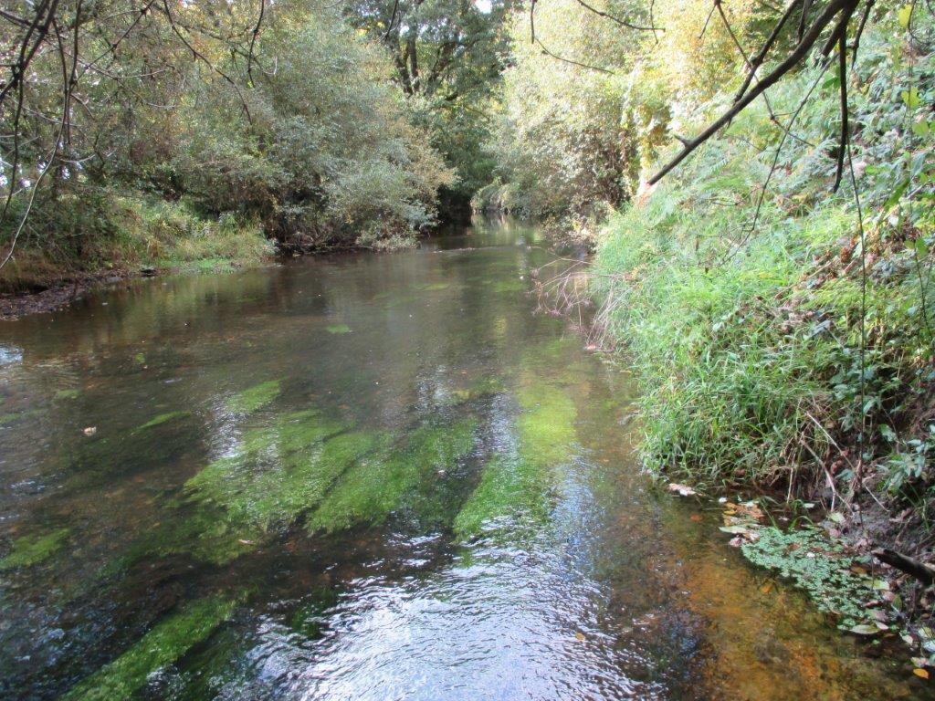 La Conserverie Morbihannaise condamnée pour avoir pollué les eaux de l'Inam [19/04/2018]