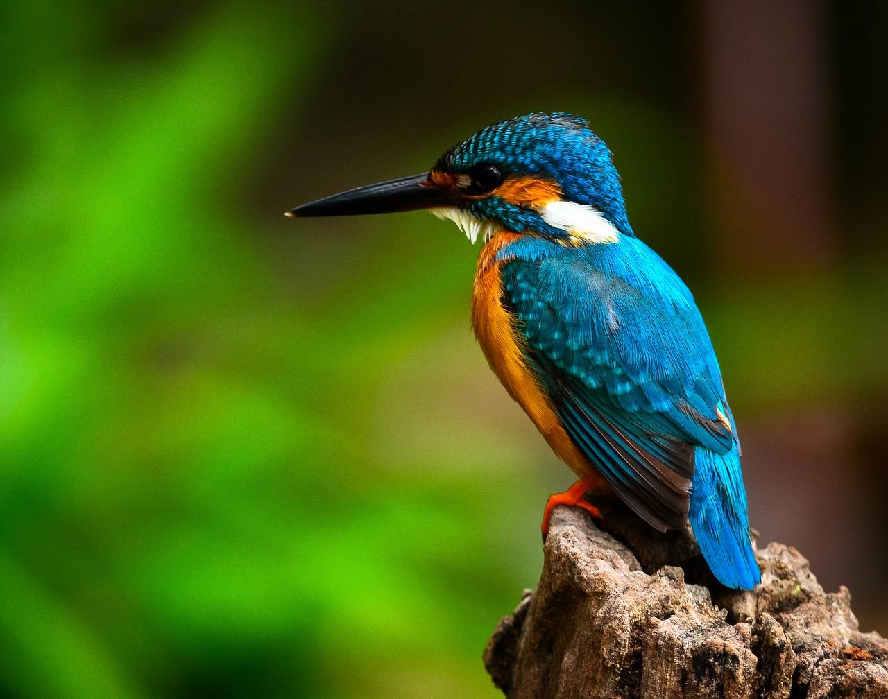 L'agence Bretonne pour la Biodiversité