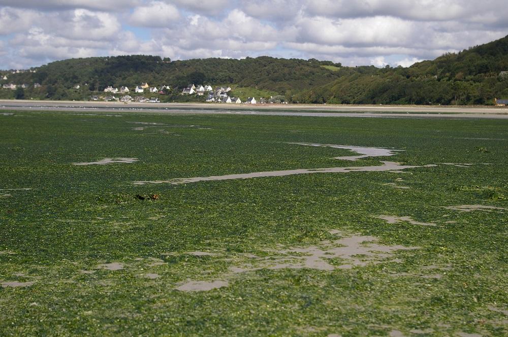 Nitrates et marées vertes