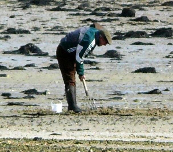 Baie de Paimpol, la pollution met en difficulté l'économie locale [02/02/2018]