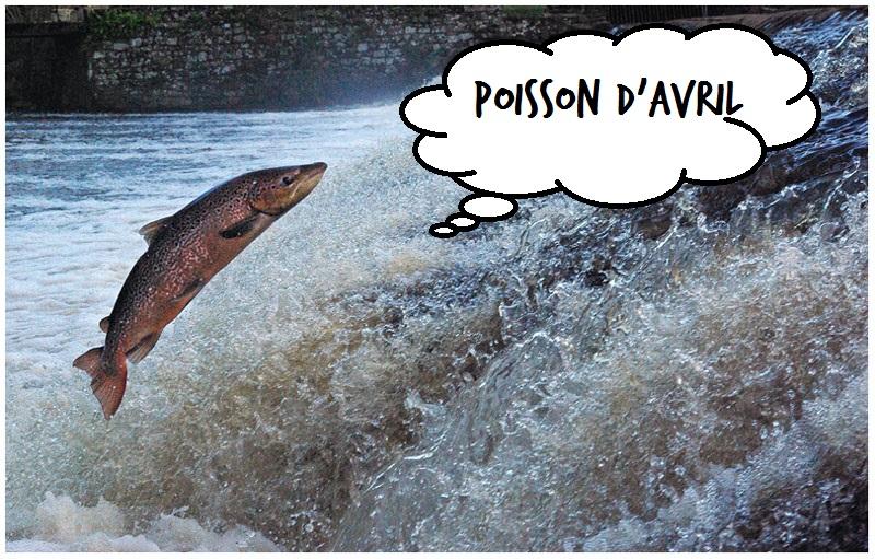 Retour du saumon : malheureusement, c'était une blague