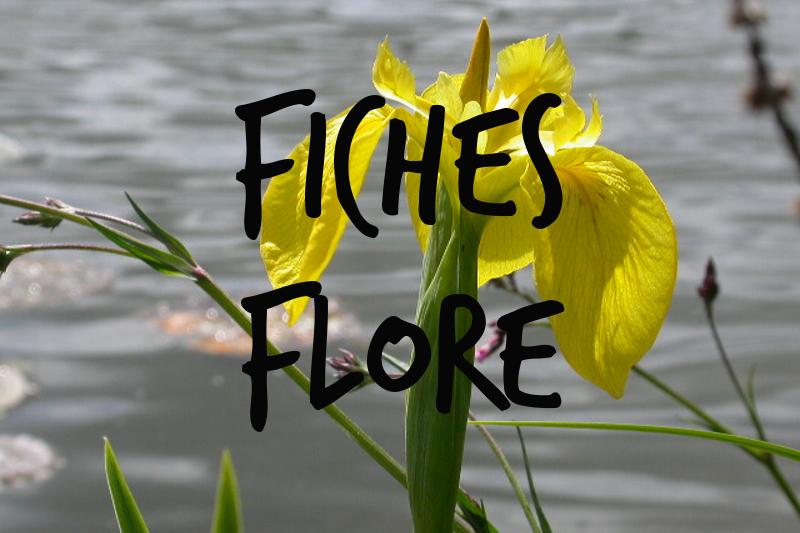 Fiches pédagogiques Flore
